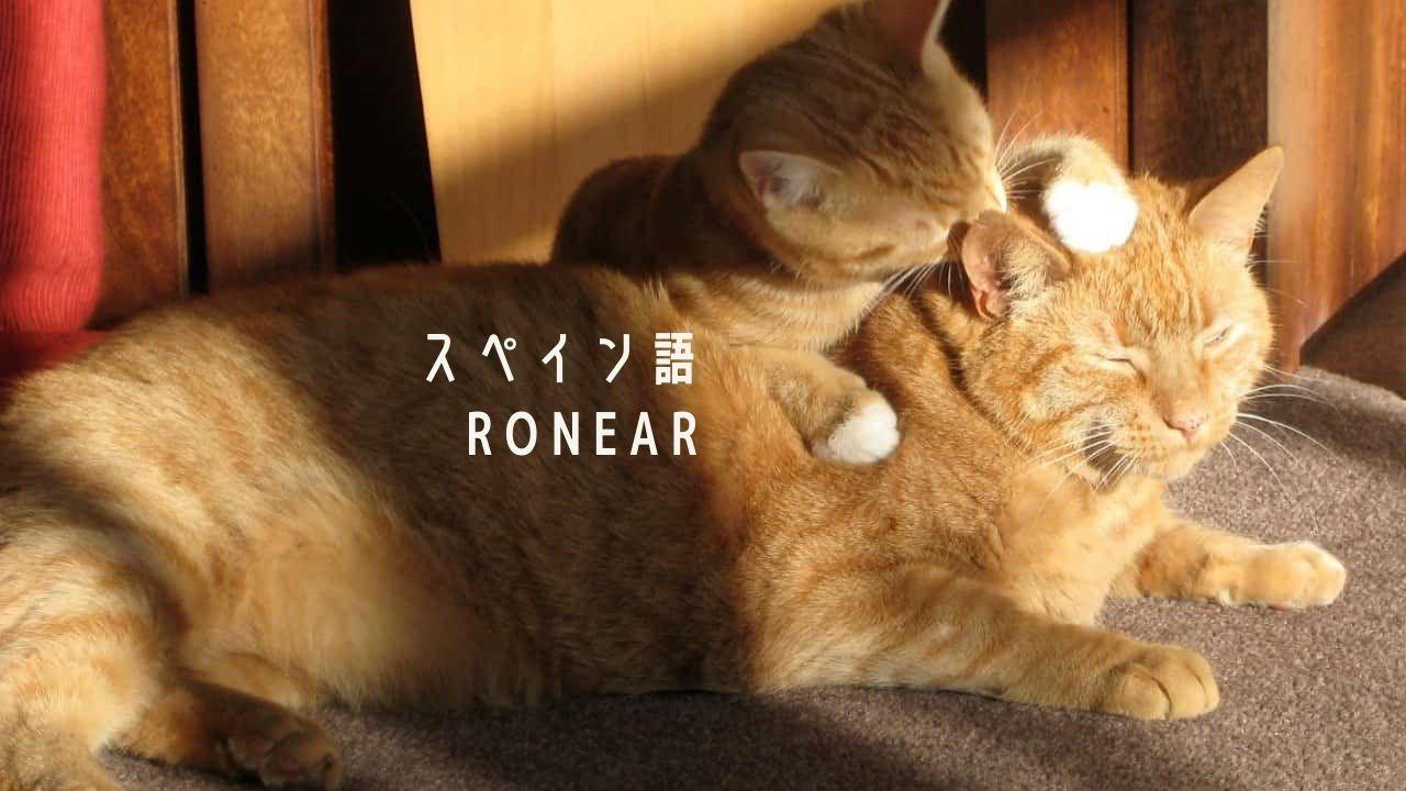 「Ronear」はアンダルシアの方言? 2つの意味を持つスペイン語