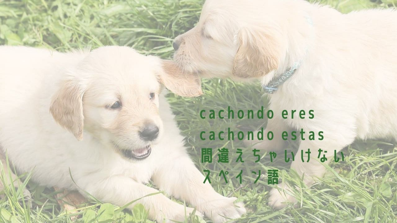 混同してはいけないスペイン語「cachondo eres」と「cachondo estas」