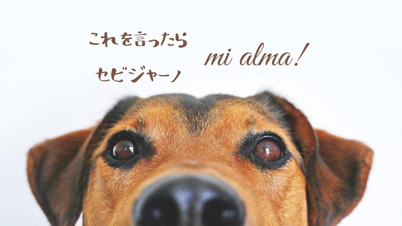これを言ったらセビジャーノ!スペイン語の「mi alma」