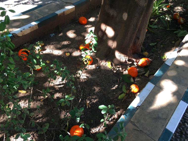 セビリアのオレンジの実
